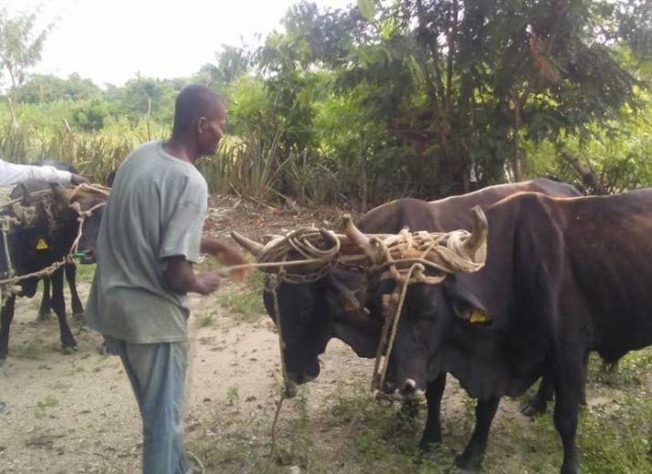 Vivre et travailler en Haïti