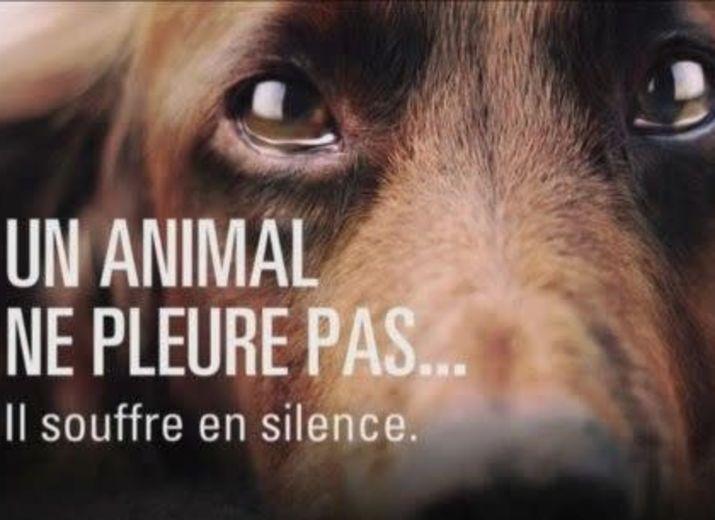 Sauver des animaux dans la détresse