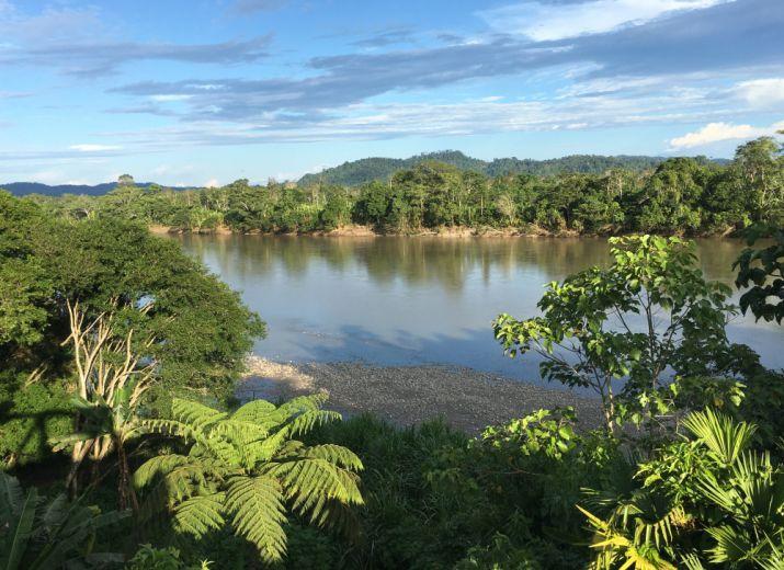 Réserve en Amazonie : Protégeons 500 hectares de forêt primaire en Equateur