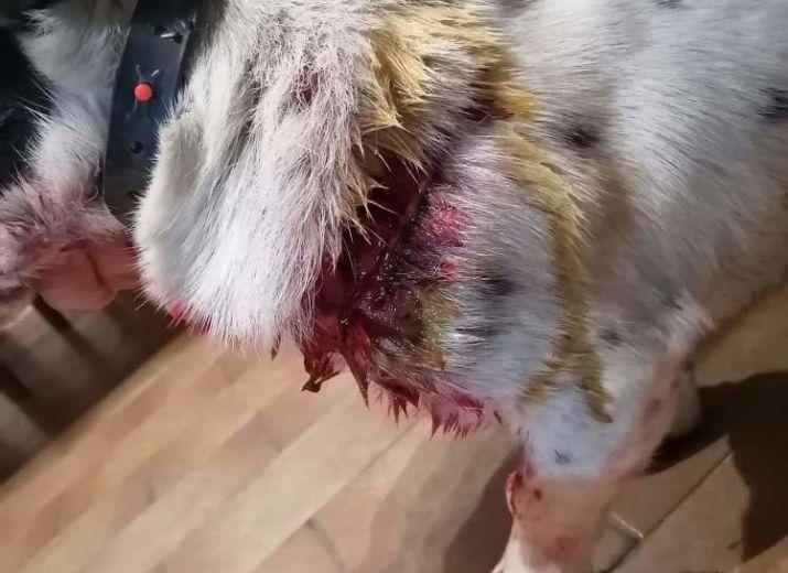 Maltraitance animal sur Gnou-Gnou