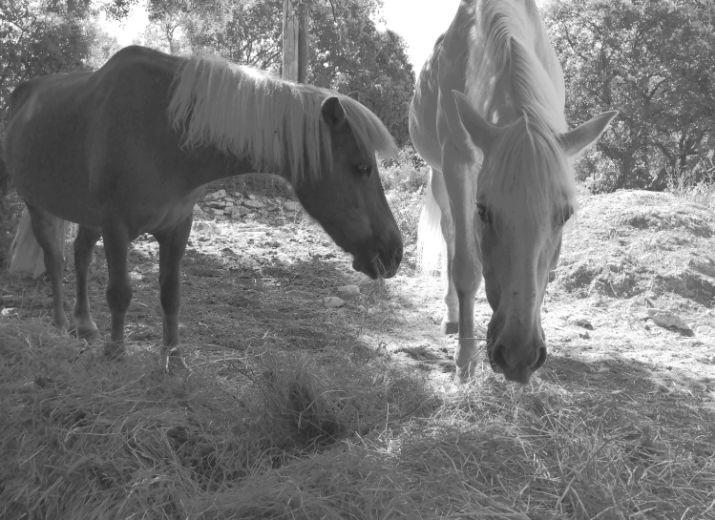 Aide à la création d'un nouvel espace pour chevaux en retraite ou maltraités