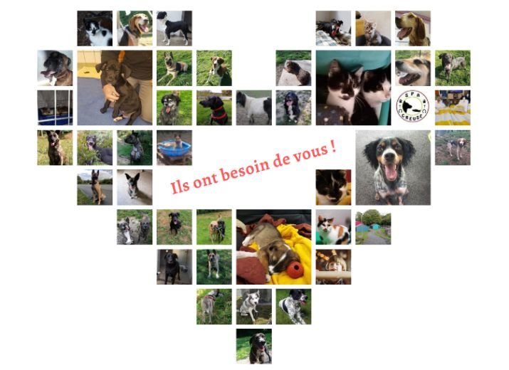Aidez votre refuge local - SPA DE CREUSE - Nous avons besoin de vous !