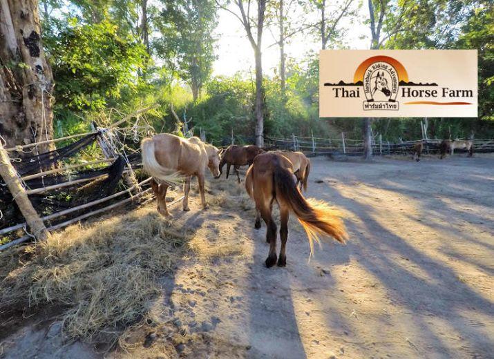 Une famille et leurs chevaux ont faim... il faut les sauver !
