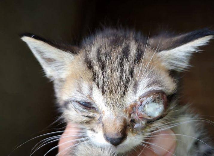 Aide pour une chirurgie oculaire urgente pour un chaton