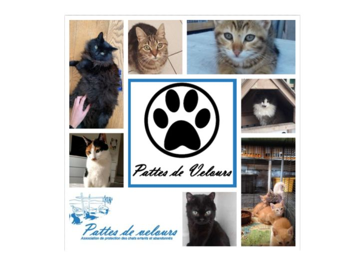 Aidons les chats de l'association Pattes de Velours de Sète !
