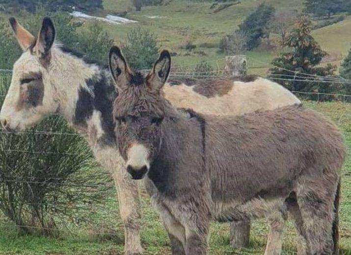 Urgent Sauvetage CADICHON et POLUX: 2 ânes qui ne demandent qu'à vivre