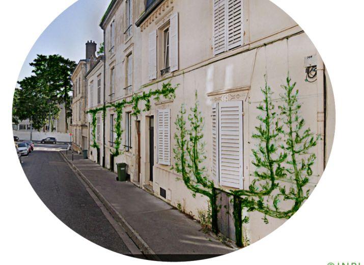 CAVES VERTES POUR TOUS ! Participez à la végétalisation de rues