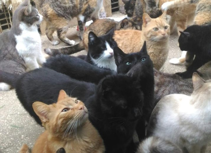 150 cats need an new home