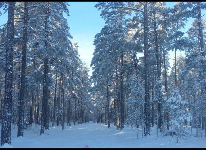 god morgon sweden