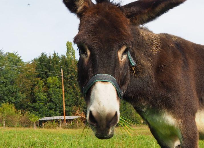 DonkeyDonations