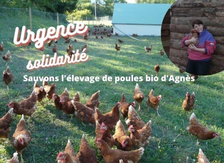 Urgence Solidarité - Sauvons l'élevage de poules bio d'Agnès!