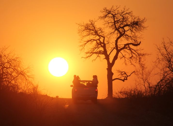 Help Save South African Wildlife and Tourism