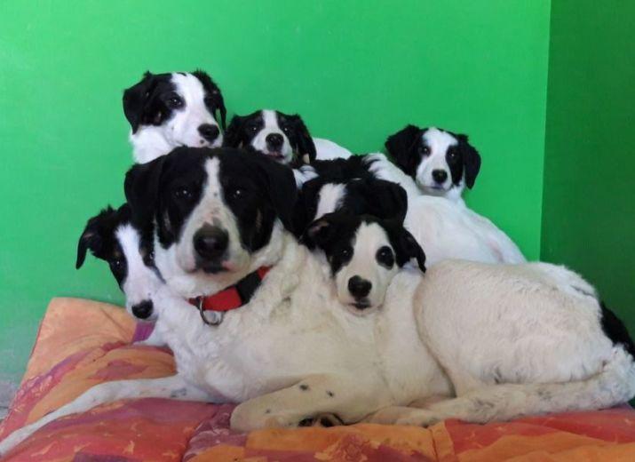 Sauvetage de 20 chiens !