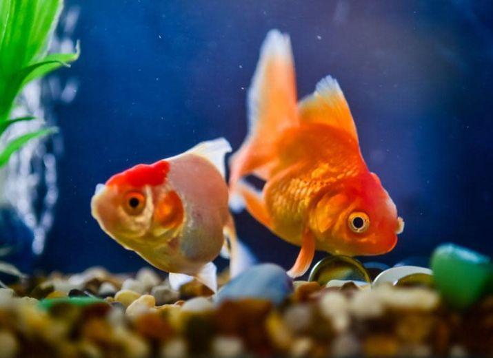 Aquarium Additives