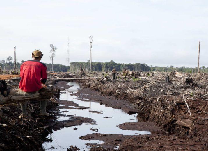 Concours inversé : des forêts pour l'Indonésie!