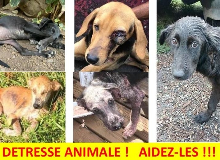 DETRESSE  ANIMALE - LA  REUNION