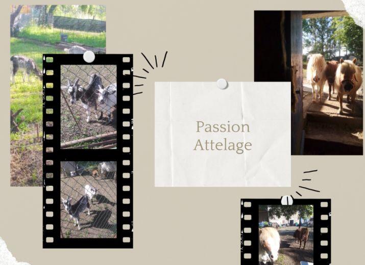 Géraldine, ses chèvres, et ses poneys