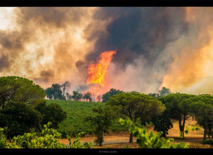 Incendie du Var : soutien aux agriculteurs sinistrés