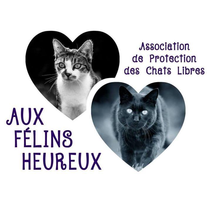 Cagnotte Aux Felins Heureux Leetchi Com