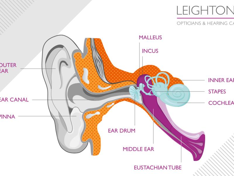 Leightons diagram of ear