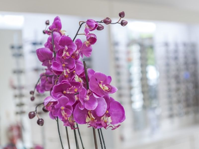 Pink flowers with glasses display in backdrop