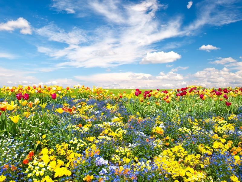 Variety of flowers in a field