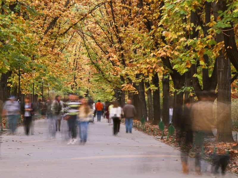 photo of a leafy street, disorientated with blurry people