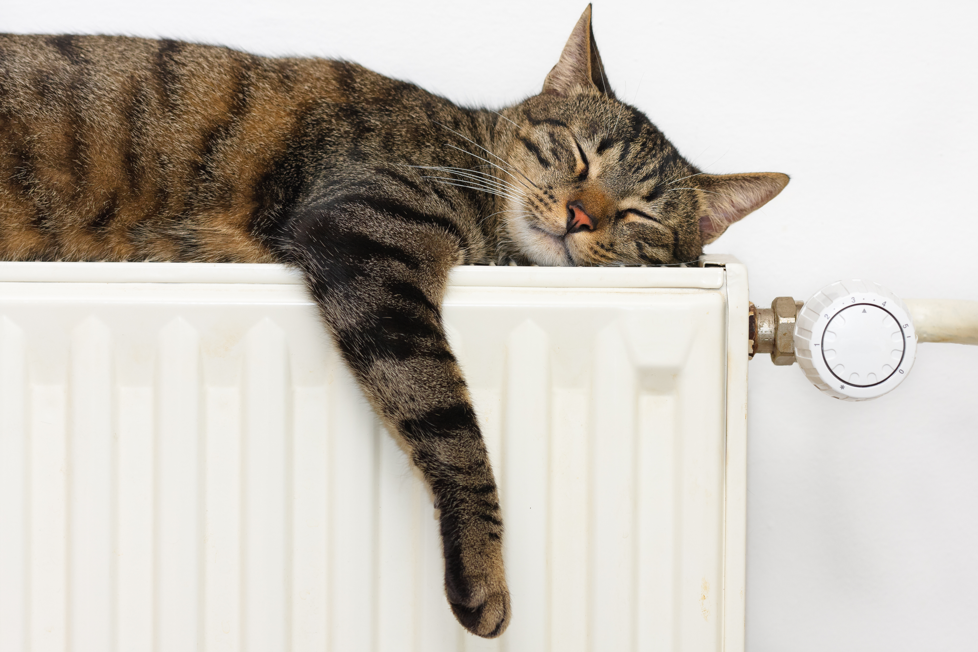 cat on radiator central heating