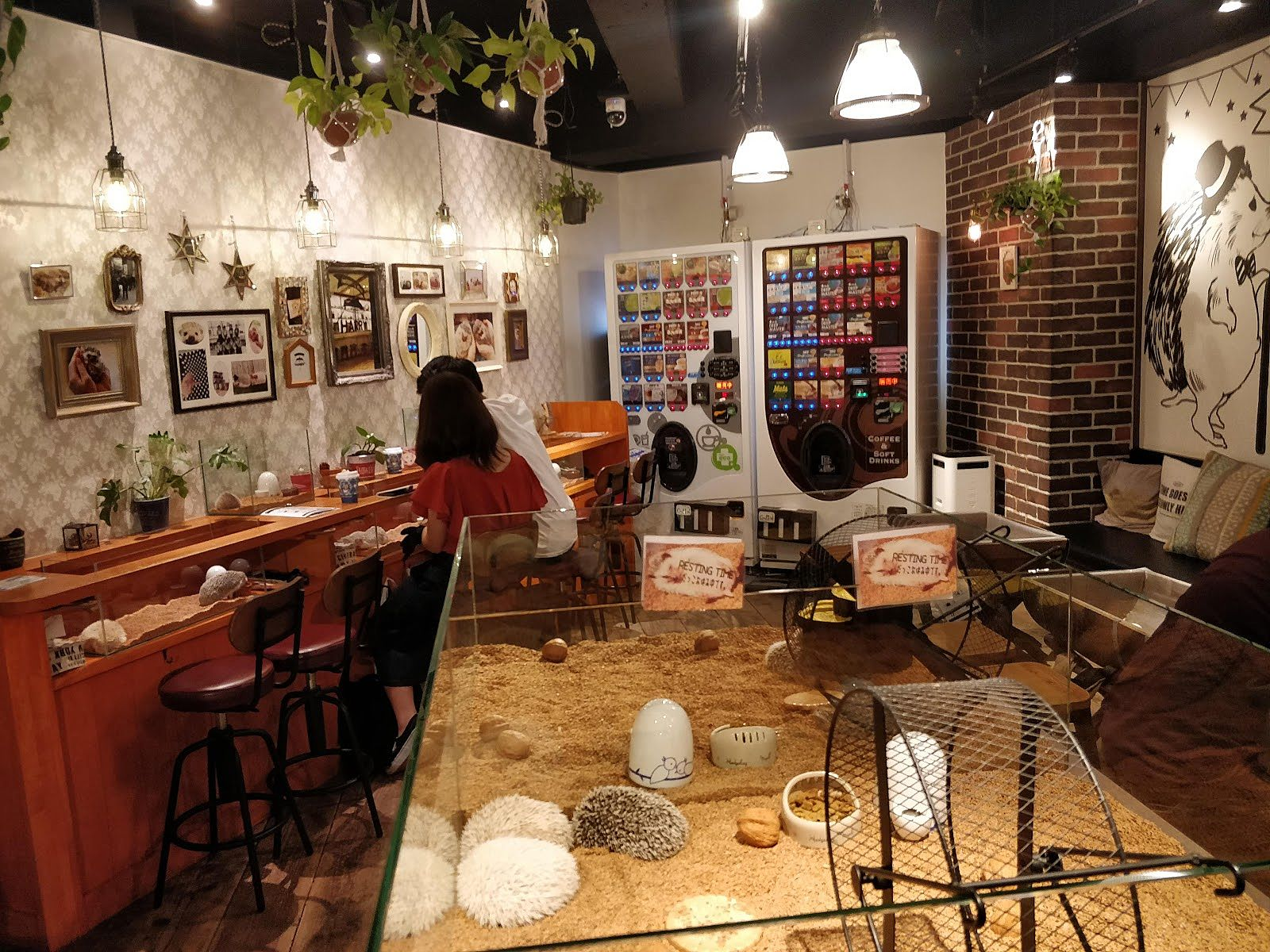 Hedgehog Cafe Harry Harajuku Tokyo Japan Recommendation By Lemi In Harajuku Adventures In Wonderland Lemi Re Discover Your City