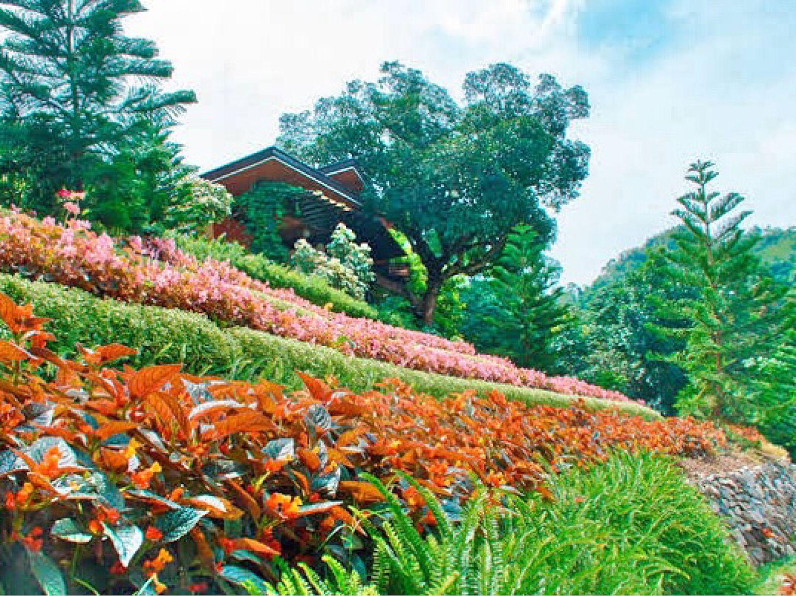Terrazas De Flores Botanical Garden Cebu City Philippines