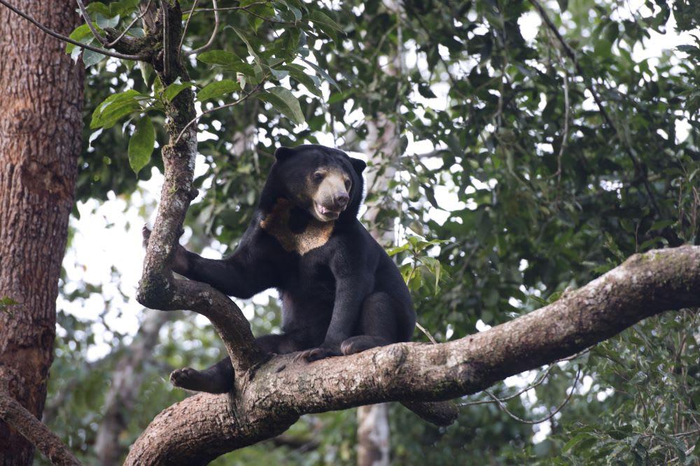 Lendis unterstützt Regenwald-Projekt in Kambodscha