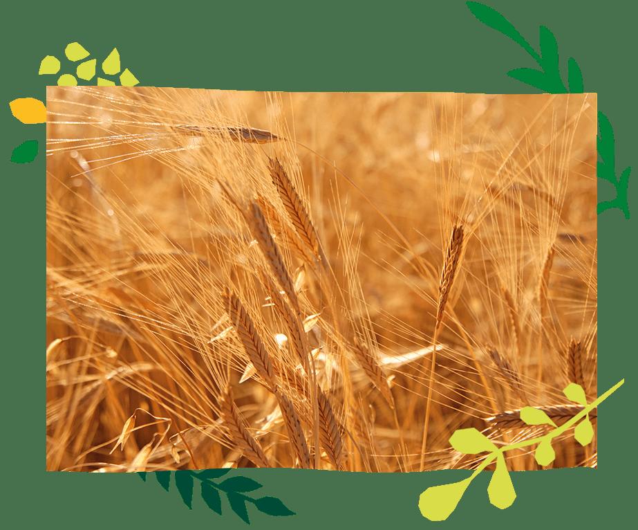engagements_bio_vegetal