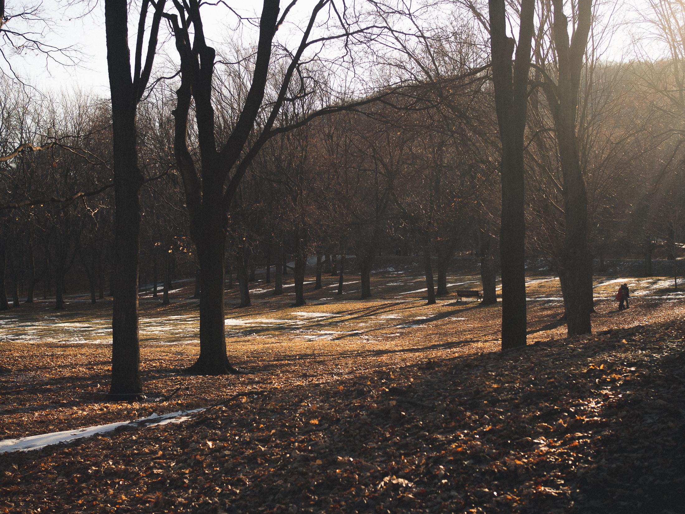arbres dans la lumière en hiver