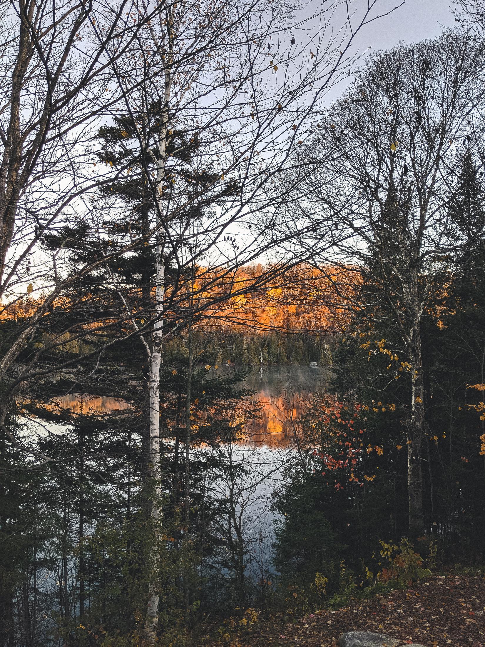 arbres au bord d'un lac en automne