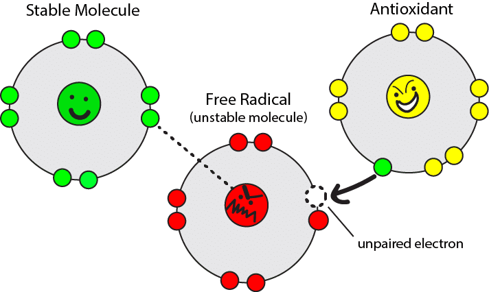 Cartoon image showing how antioxidant molecules and free radicals interact via electrons