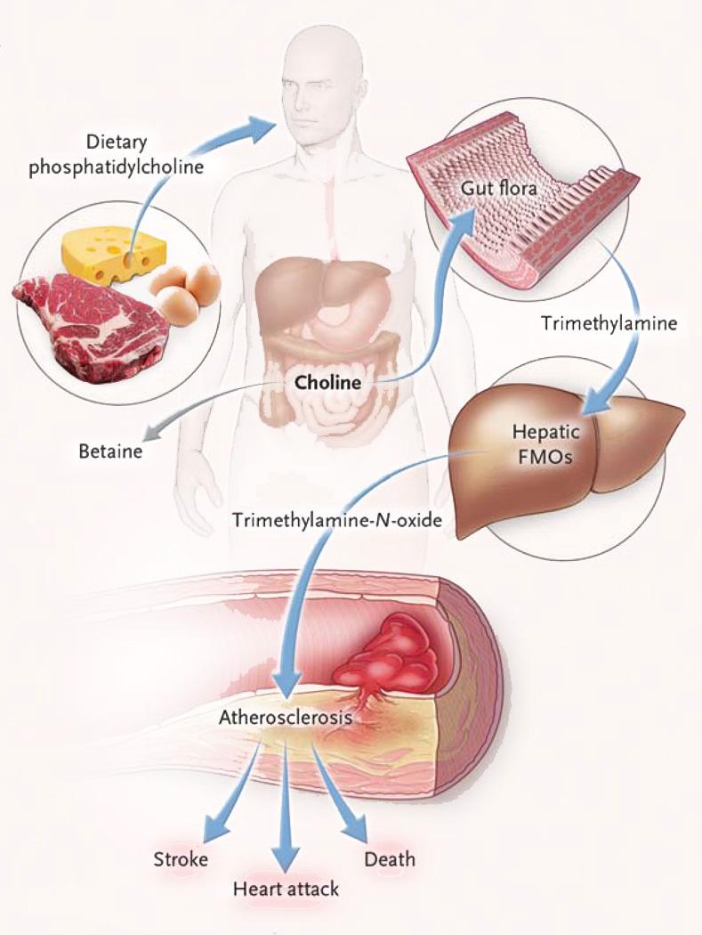 TMAO mechanism