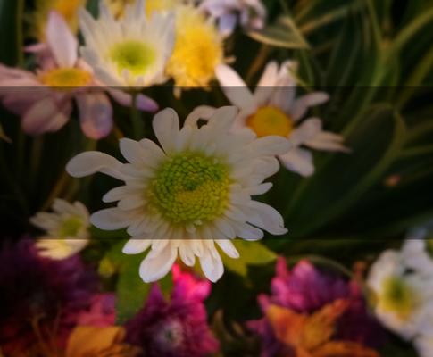 Mobile Photo Editor : Snapseed