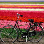 Beyond the Tulips Netherlands Cycle