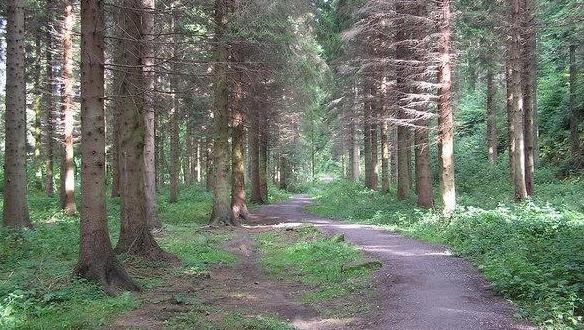 Hamsterley Forest Running Festival 2022