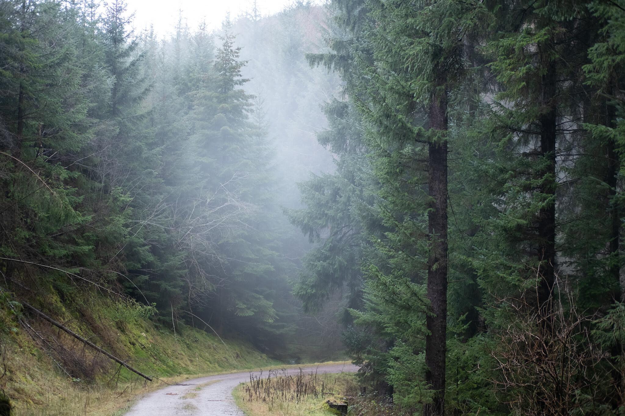 Black Mountains 50 & Marathon