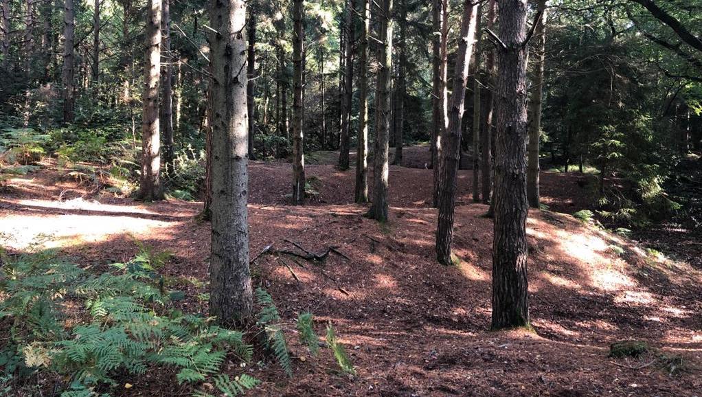 Resolution Trail Run
