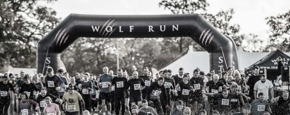 Wolf Run – Winter Wolf
