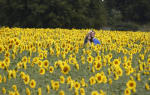 Sunflower Run/Walk