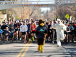 Turkey Trot Predict
