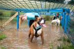 Muddy Dog Challenge - Newcastle