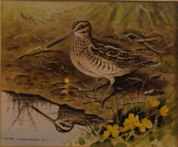 Watercolour Of A Snipe