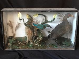 Antique Taxidermy Corn Crake & Kingfisher Birds