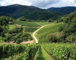 La route des vignobles d'Alsace 2