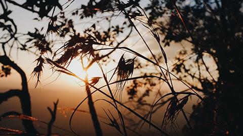 Winnow, Thresh, Seed