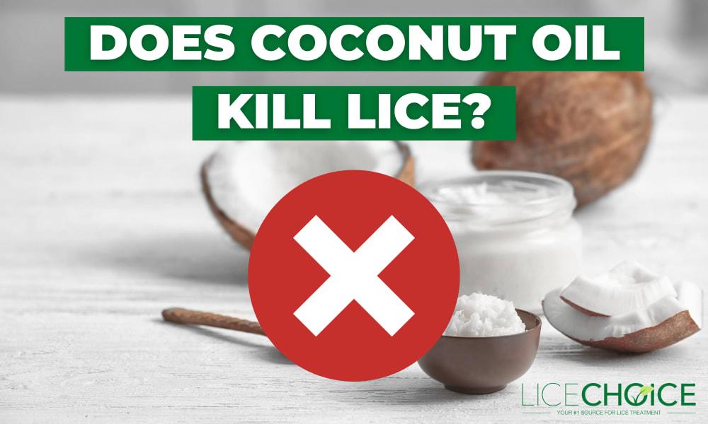 coconut oil for lice